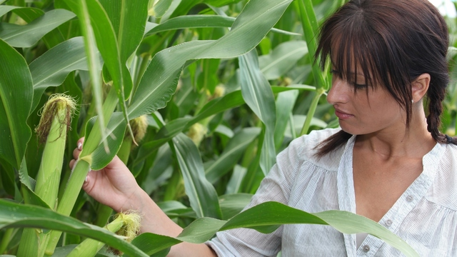 What are GMOs? How Can They Affect Me?