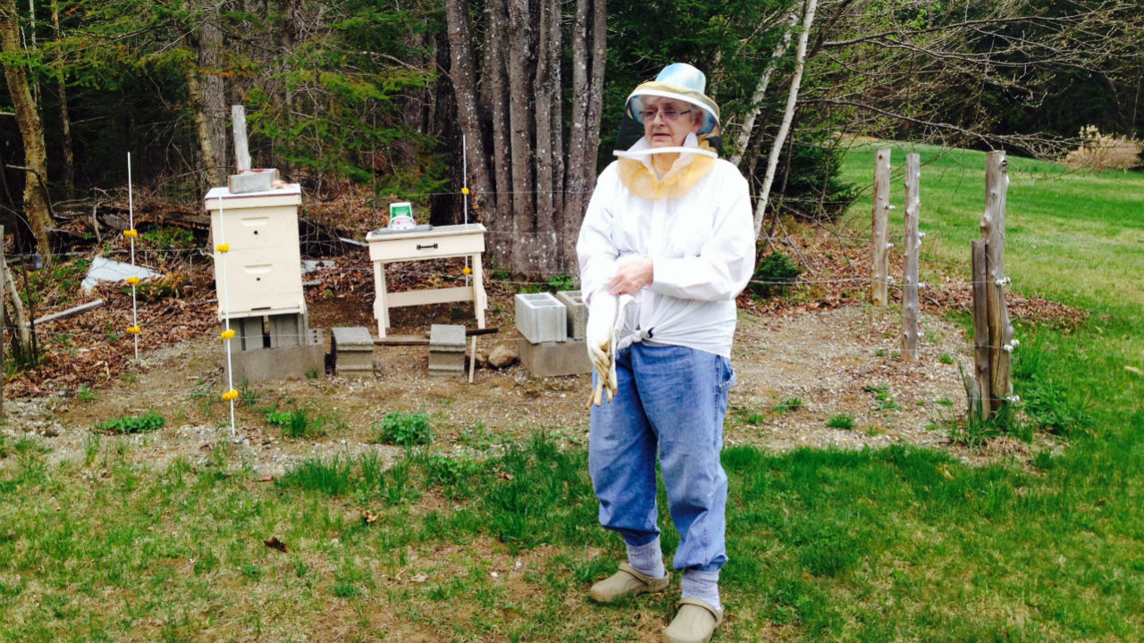 Phyllis beekeeping