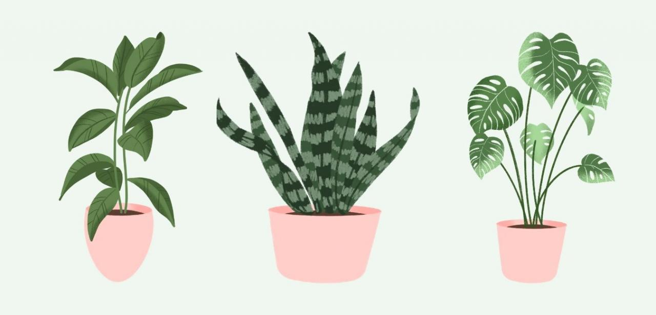 6 Plants to Cleanse Your Environment