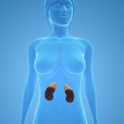 Time to Assess the Health of Your Kidneys