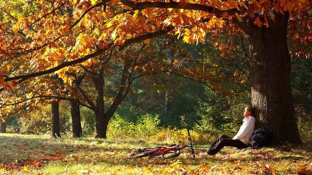 beauty and health hazards come with autumn leaves