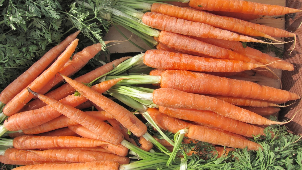 Are Carrots Really Helpful For Your Vision?