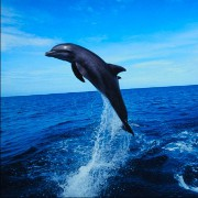 Are Dolphins Warning Humans About Health Risks?