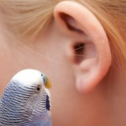 Hearing Loss related image
