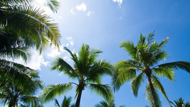 Fighting Cancer with Healing Fats: Vitamin E in Tropical Oils