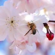 For Healing, Think Honey