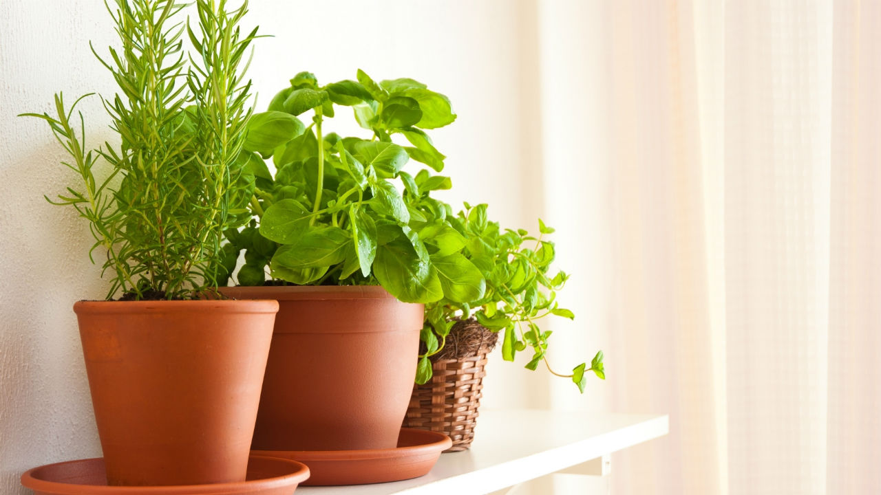 10 Healing Herbs to Grow Yourself