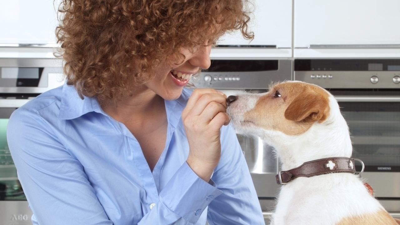 Healthy Human Foods You Can Feed to Your Dog