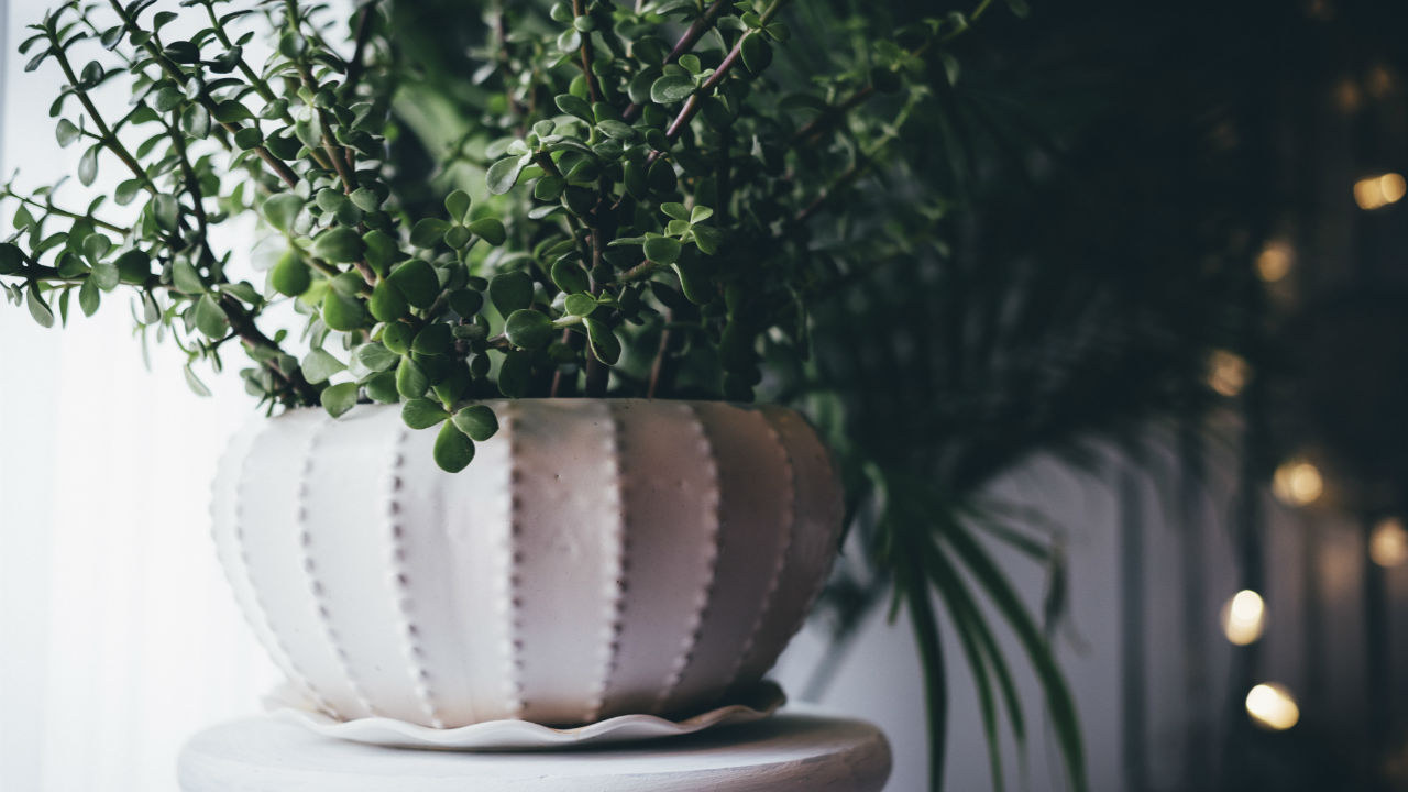 Indoor Plants For a Breath of Fresh Air