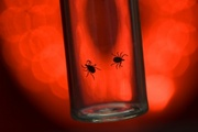 Lyme Disease related image