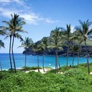 kava-aloha-elixir-of-hawaii
