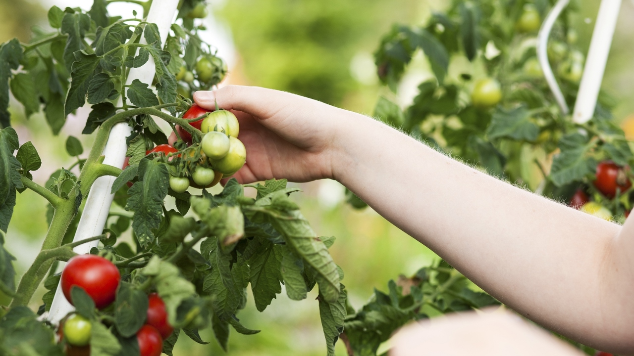 Kitchen Garden Foods Want To Grow Your First Kitchen Garden Dig In With Our 10 Tips