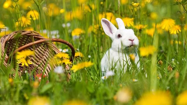 no eggs, no ham - i have a veggie Easter plan
