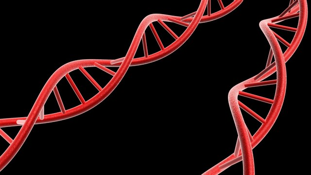 Choice of Best Ovarian Cancer Drug May Be Aided by Genetics