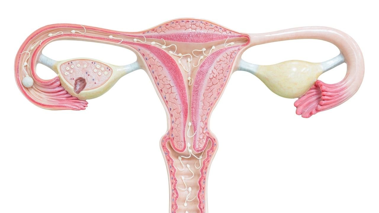 Ovarian Cysts: How Much Do You Know About Them?