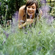 why you should keep lavender at your house