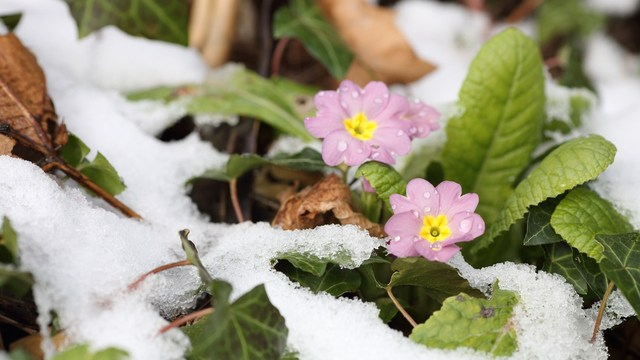 Is Mental Health Affected By The Seasons?