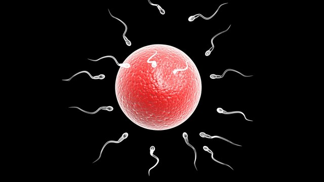 Sperm Swim Against the Current, Says New Research
