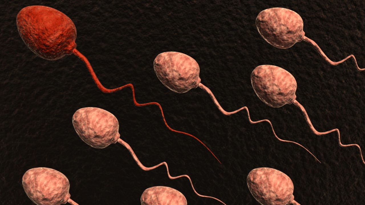 Sperm Check: On Understanding Semen Analysis For Fertility