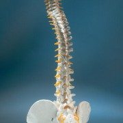 Spinal Stenosis: The Facts