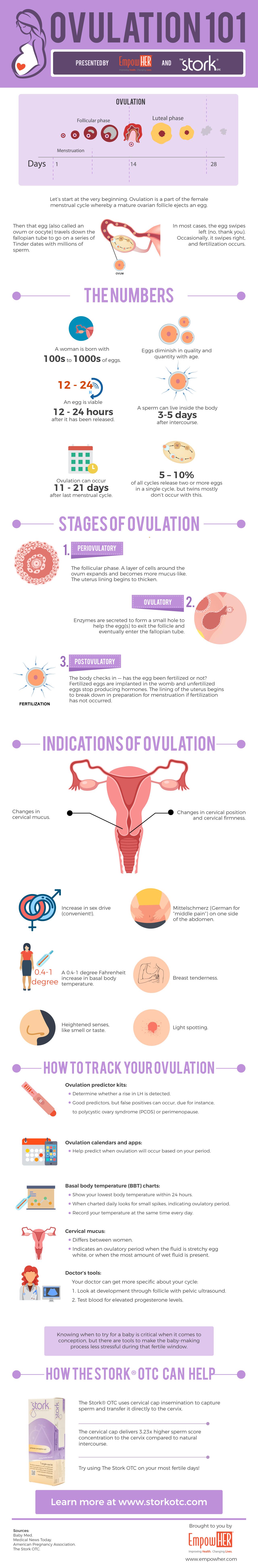 Infographic Ovulation 101