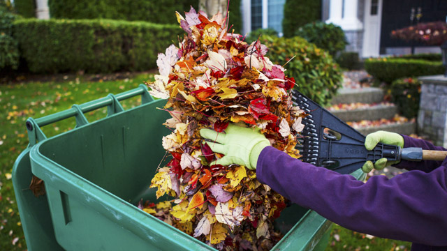 Limit fall allergies by getting a jump on your yard work