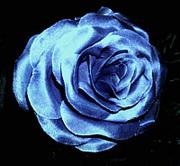 bluedesertrose@gmx.com